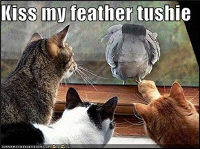 Kiss my feather tushie