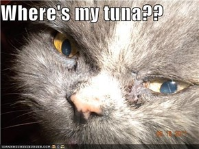 Where's my tuna??