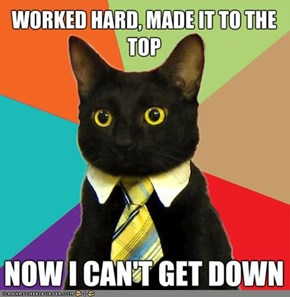 MemeCats: Business Cat Climbs the Corporate Ladder