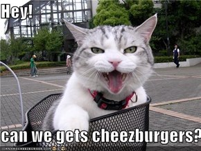 Hey!  can we gets cheezburgers?