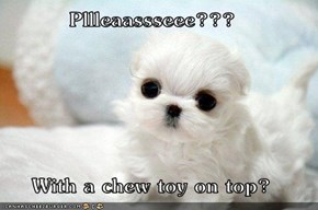 Pllleaassseee???  With a chew toy on top?