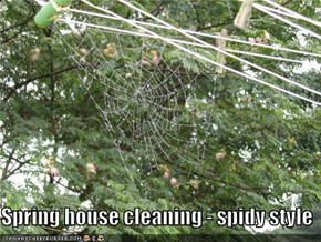 Spring house cleaning - spidy style