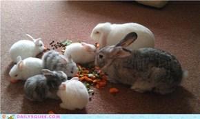 Bunny Noms!