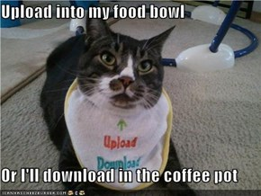Upload into my food bowl