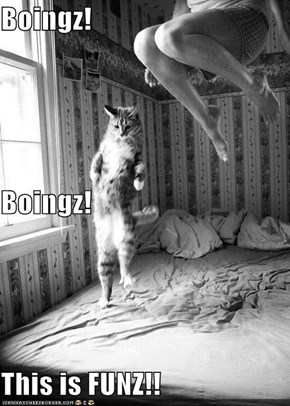 Boingz! Boingz! This is FUNZ!!