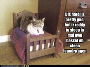 Dis hotel is pretty gud, but iz reddy to sleep in mai own basket ob cleen laundry agen