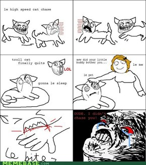 Cats Logic...