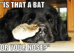 """IS THAT A BAT  OR YOUR NOSE?"""