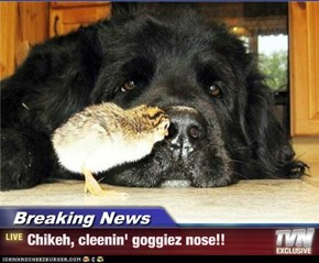 Breaking News - Chikeh, cleenin' goggiez nose!!