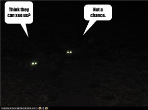 Stealth Cats