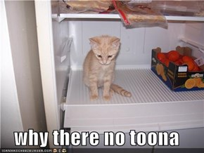 why there no toona