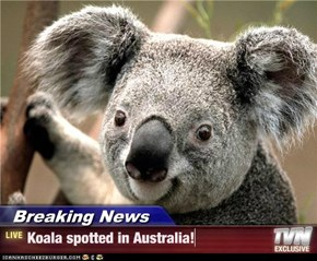 Breaking News - Koala spotted in Australia!