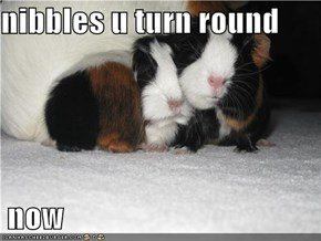nibbles u turn round   now