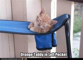 Orange Tabby in Left Pocket