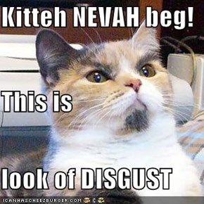 Kitteh NEVAH beg! This is  look of DISGUST