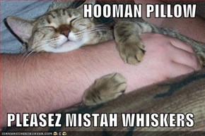 HOOMAN PILLOW   PLEASEZ MISTAH WHISKERS