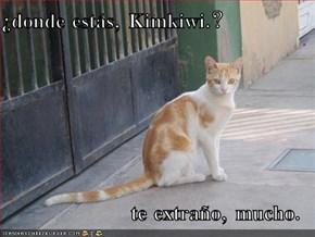¿donde estás, Kimkiwi.?   te extraño, mucho.