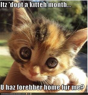 Itz 'dopt a kitteh month...  U haz forebber home fur me?