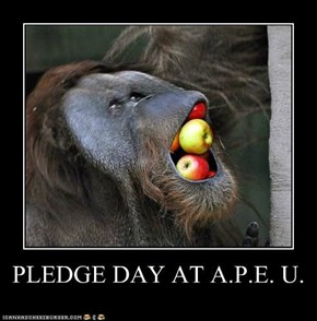PLEDGE DAY AT A.P.E. U.