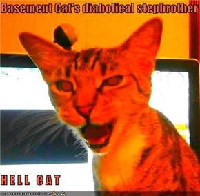 Basement Cat's diabolical stepbrother  H E L L   C A T