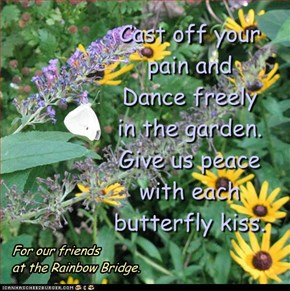 Cast off your pain and  Dance freely  in the garden. Give us peace with each butterfly kiss.