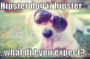 Hipster dog iz hipster  ..what did you expect?