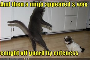 And then a ninja appeared & was  caught off guard by cuteness
