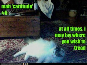 mah 'cattitude' #6: