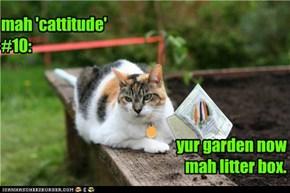 mah 'cattitude' #10: