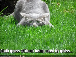 Stalk grass without being seen by grass...