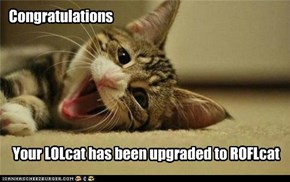 Lolcat upgrade