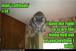 mah 'cattitude' #14: