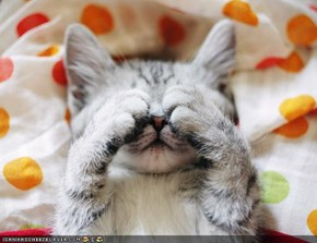 Cyoot Kitteh of teh Day: Peek-a-Boo Champion