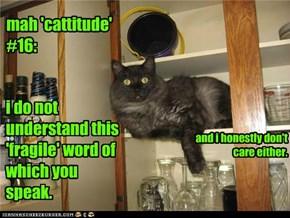 mah 'cattitude' #16: