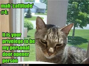 mah 'cattitude' #4:
