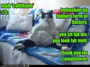 mah 'cattitude' #5: