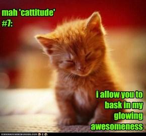 mah 'cattitude' #7: