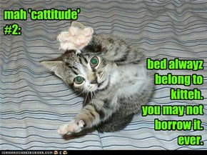 mah 'cattitude' #2: