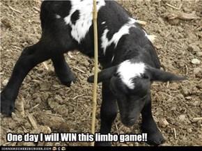 Lambchop Limbo