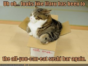 Uh oh... looks like Maru has been to      the all-you-can-eat sushi bar again.