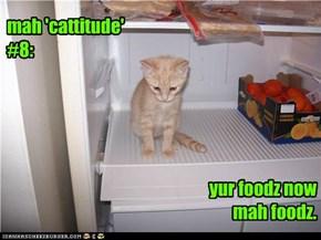 mah 'cattitude' #8:
