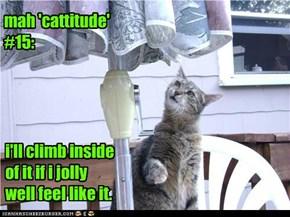 mah 'cattitude' #15: