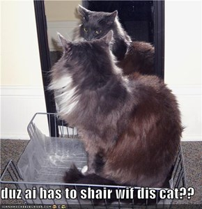 duz ai has to shair wif dis cat??
