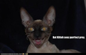 Bat Kitteh seez purrfect prey.