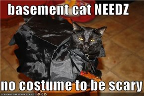 basement cat NEEDZ  no costume to be scary