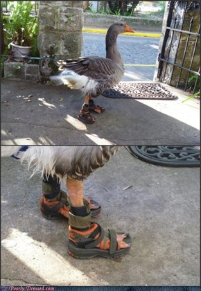 Silly Duck, Your Feet Aren't Prepared for the Summer Yet