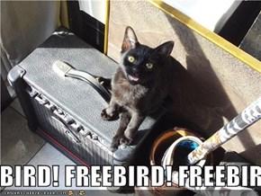 FREEBIRD! FREEBIRD! FREEBIRD! FREEBIRD! FREEBIRD!
