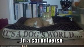 ...in a cat universe.