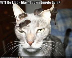 WTF Do I look like A Fuckin Jungle Gym?