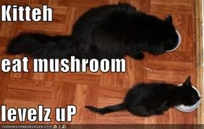 Kitteh eat mushroom levelz uP